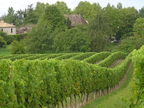 Le vignoble des Moulins De Boisse