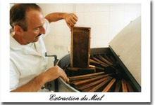extraction du miel