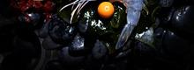 Tartare d'Obsiblue et mangue verte, condiment curcuma