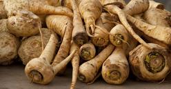 Les panais qui datent de la Grèce antique se cuisinent comme les carottes ou les navets