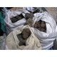 Truffes noires Tubermélanosporum