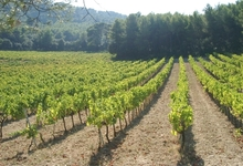 Le vignoble du Grand Fontanille