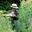 AMAP Les Jardins de la Charreau