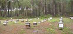 Les vertus du miel daxois