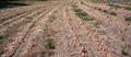 Le confit d'oignons, spécialité du domaine de Bordère dans l'Aude