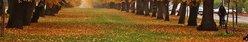 Que savez-vous des produits d'automne ? Résultats