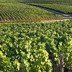 Les appellations de Bordeaux