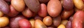 Les pommes de terre appelées truffes dans le parler lyonnais
