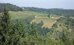 Vignobles des Côtes du Forez