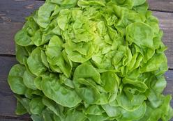 Une belle... salade !