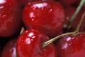La cerise, rouge, sombre et pulpeuse
