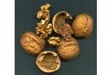 Huile de noix