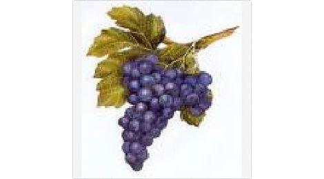 Vin Rouge AOC Côtes du Rhône