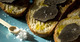Toasts de truffes crues