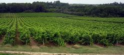 Le vignoble d'Armagnac, situé entre le Gers et les Landes