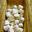 Clochettes de chèvre de la ferme du Port Aubry