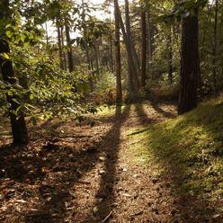 La forêt de Fontainebleau