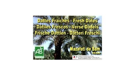 Dattes Fraîches Mazafati de Bam