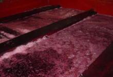 Cuve de vin rouge en fermentation