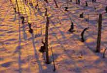 Bel avenir sous la neige
