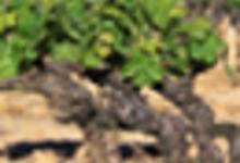 Domaine des bouzons