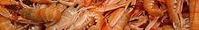 Préparer les langoustines