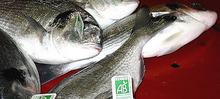 Carpaccio de poisson aux poireaux primeurs nantais