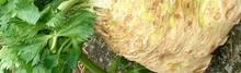 Noisette de chevreuil en croustillant, dariole de céleri