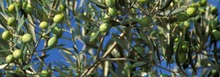 Poivrons confits à l'huile d'olive