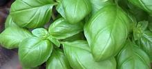 Soupe au pistou aux légumes de Nice