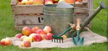 Le clafoutis pommes poires flambées au Calvados