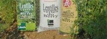 Les ravioles à la farine de lentilles vertes du Berry, farcies aux escargots du Danjon