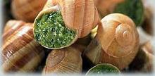 Les Escargots à la Bourguignone
