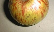 Volaille de Houdan aux pommes Faro gratte-paille en croquettes