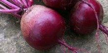 Assiette de légumes d'hiver et œuf poché