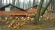 Poulet fermier des Landes cuit en cocotte aux pommes de pin