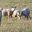 Agneaux et volailles Gallard
