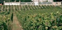 Vignobles Laffourcade