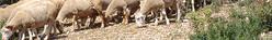 Zone de production de l'agneau de Sisteron