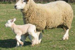 Zone de production de l'agneau du Bourbonnais