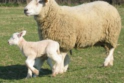Association pour la défense de l'élevage traditionnel en Bourbonnais des animaux de Boucherie