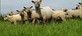 Zone de production de l'agneau du  Poitou-Charentes