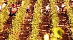 Zone de production de l'ajaccio blanc