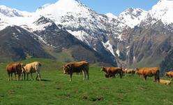 un paysage de la Vallée de l'Aure