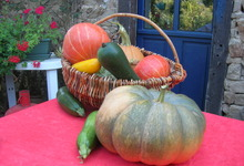 courges, potirons, courgettes