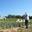 champ poireaux