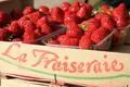 fraises la fraiseraie