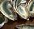 L'huître marenne oléron