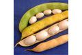 Le coco de paimpol