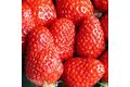 La fraise de plougastel